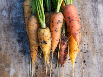 Close Up Fresh Vintage Carrots Against Weathered Wooden Background